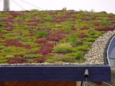 Een groen dak maak je huis duurzaam en mooi groene daken for Huis duurzaam maken