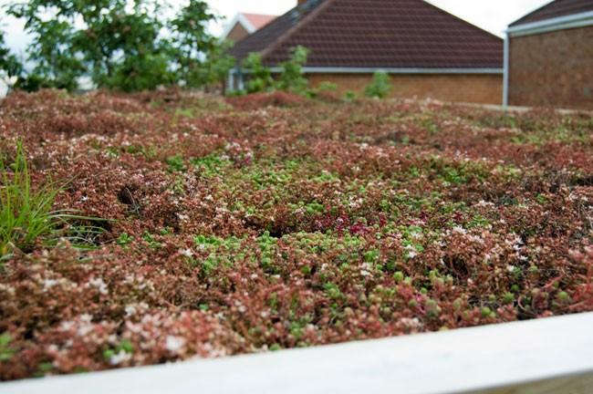 Duurzaam dak groendak sedumdak wit of waterdak for Huis duurzaam maken