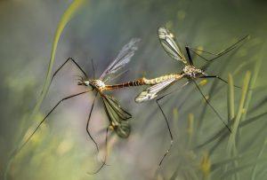 natuurlijk middel tegen muggen
