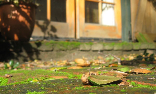 Favoriete Groene aanslag op Terrastegels en Klinkers Duurzaam en &KI43