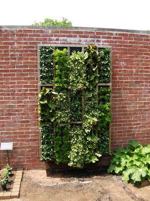 Groene muur planten