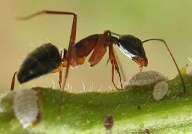 Mieren bestrijden: een geduchte tegenstander