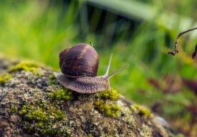 Slakken bestrijden in je tuin op een diervriendelijke manier