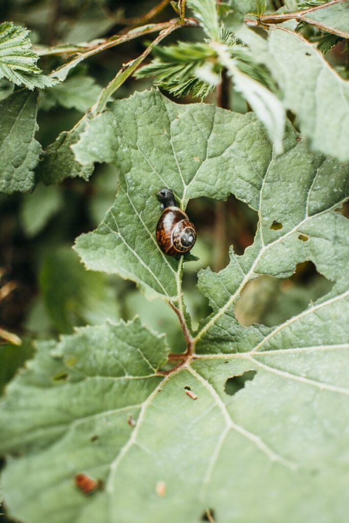 slakken bestrijden in de tuin