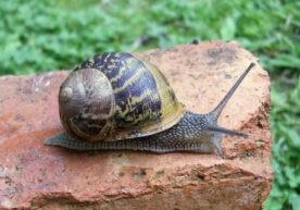 Slakken in je tuin: hoe kun je ze natuurlijk bestrijden?