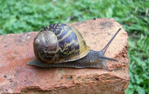 Wat te doen tegen slakken in huis