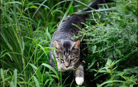 Katten overlast