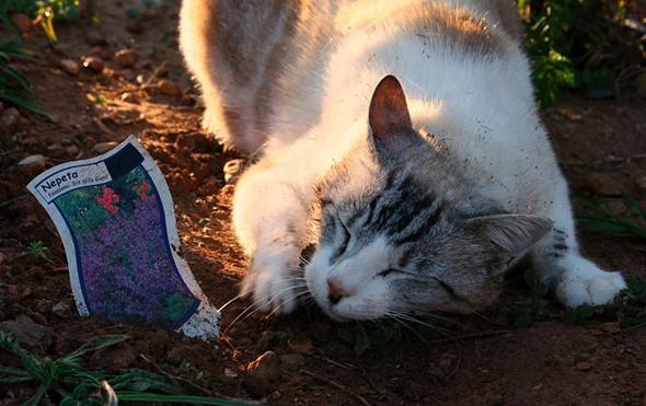 Kattenstront In Tuin : Kattenstront in tuin kattenpoep maakt buurman boos westerlo regio