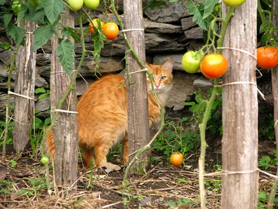 Kattenpoep in de tuin