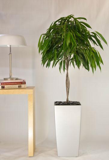 Binnenklimaat: schone lucht in huis door \'reinigende\' kamerplanten