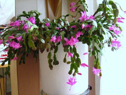 Gezondheid bloemen