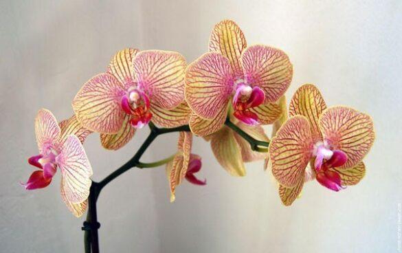 Orchidee huiskamer