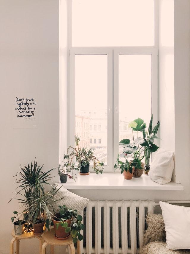 vochtabsorberende planten