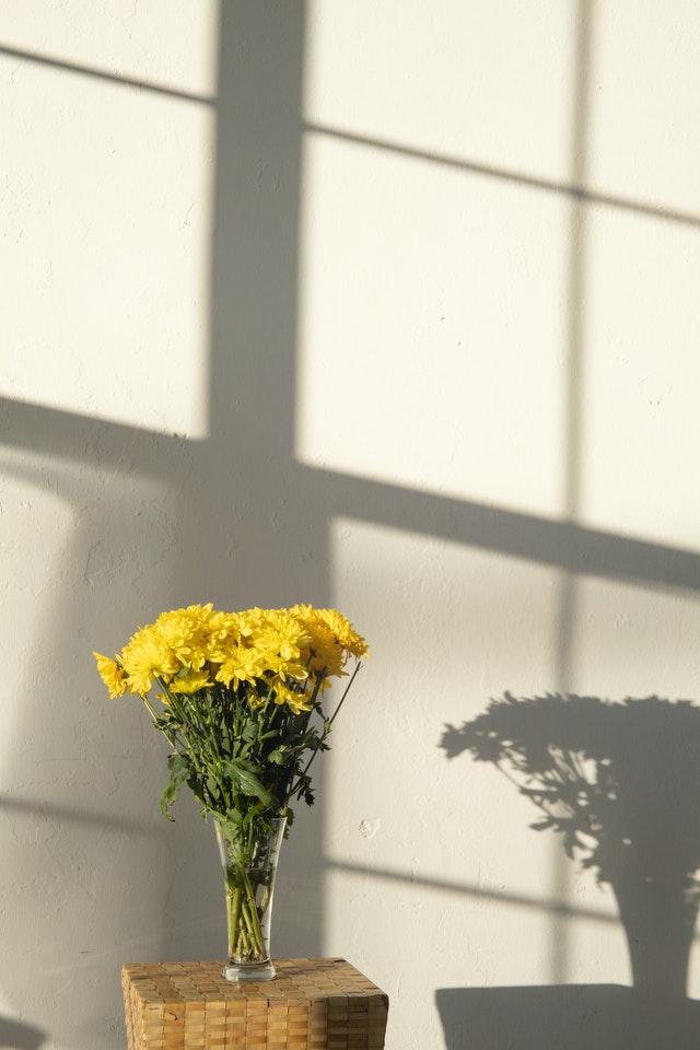 vochtabsorberende luchtzuiverende bloemen planten