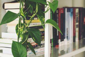 vochtabsorberende planten planten die vocht uit de lucht halen
