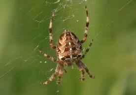 Spinnen bestrijden in je huis