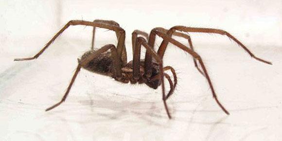 Spinnen huis overlast