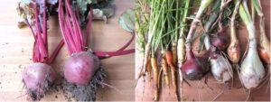 Duurzame gezonde voeding