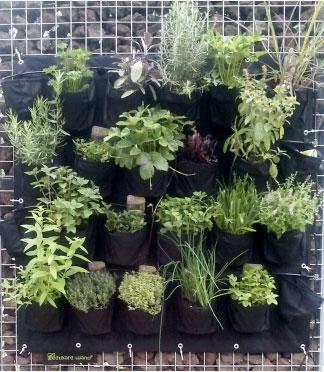 Creatieve duurzame verticale recycle tuinen van pet flessen for Verticale tuin systeem