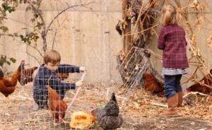 Gft afvalreductie kippen