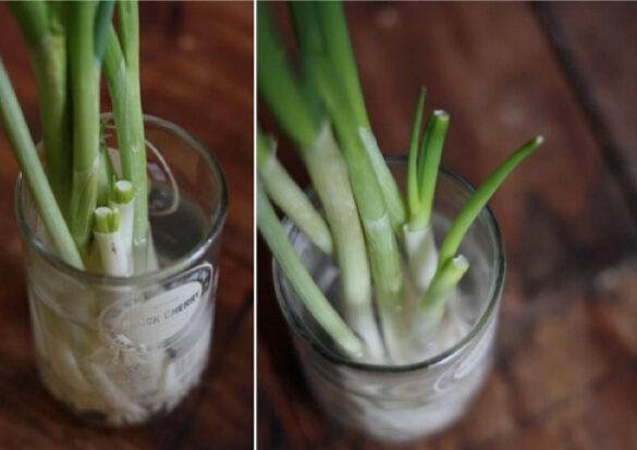 Zelfvoorziend groenten kweken
