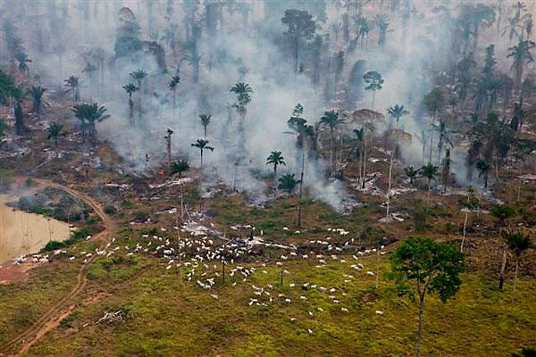 Ontbossing bos met dieren