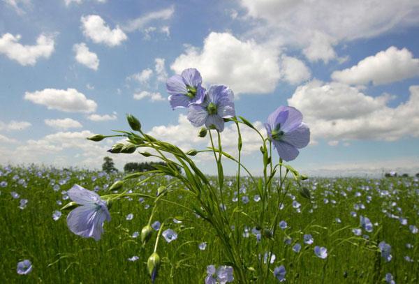 Veld met bloemen buiten