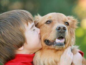 Huisdieren hond