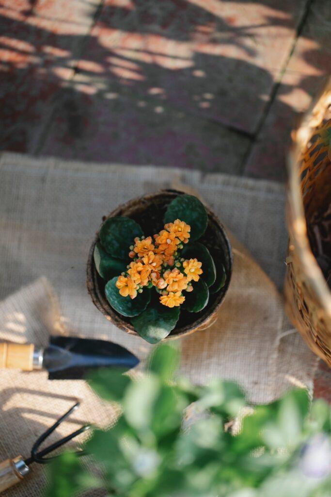 duurzame tuin tuingereedschap duurzaam schoonmaken