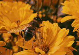 Alles over bijensterfte en wat jij daaraan kunt veranderen