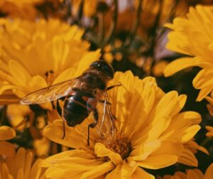 bijensterfte tegen aan - wat jij kunt doen