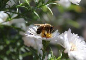 Insecten sterven uit - wat je kunt doen om insectensterfte te voorkomen