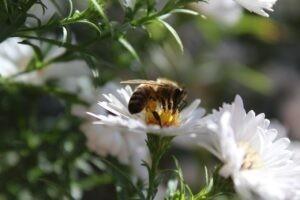 insectensterfte wat jij kunt doen