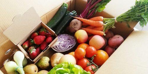 Vegetables fruit tomato vegetable
